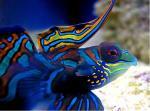como hacer lampara leds de 100W para acuario marino - last post by cosentinocristian