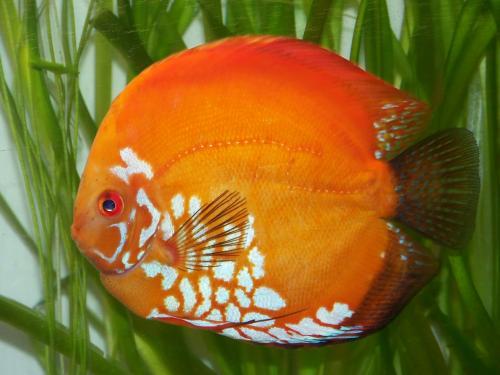 alimento hikari - last post by swordfish