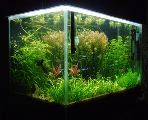 Algas Unicelulares, Agua verde! - last post by ger_ceivo